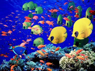 tropical wallpaper. Tropical Harmony Hi-res