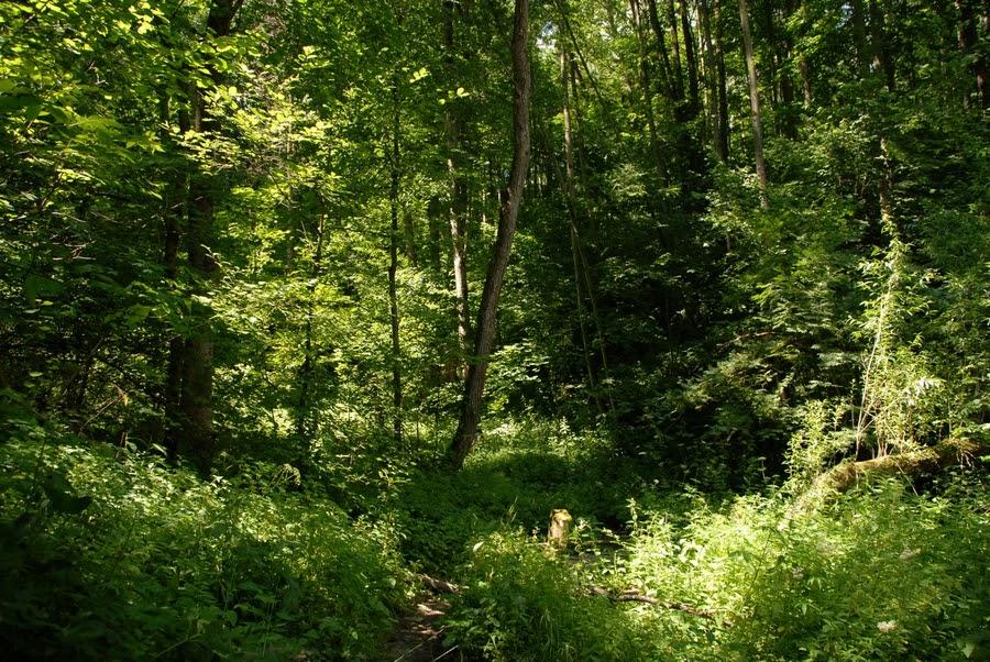 Full Frame Views A Forest Scene