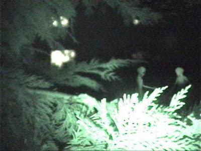 Extraterestres que viven entre nosotros reptilianos videos