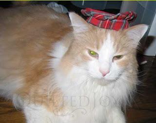Yogi the cat