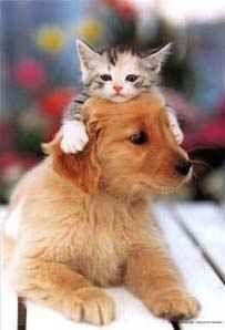 perro y gato !!!
