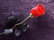 Obiecana róża...