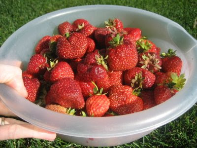 Alaskan Strawberries