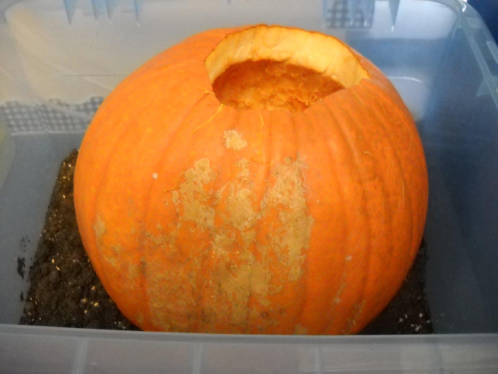 Mrs Wood S Kindergarten Class Inside Of A Pumpkin