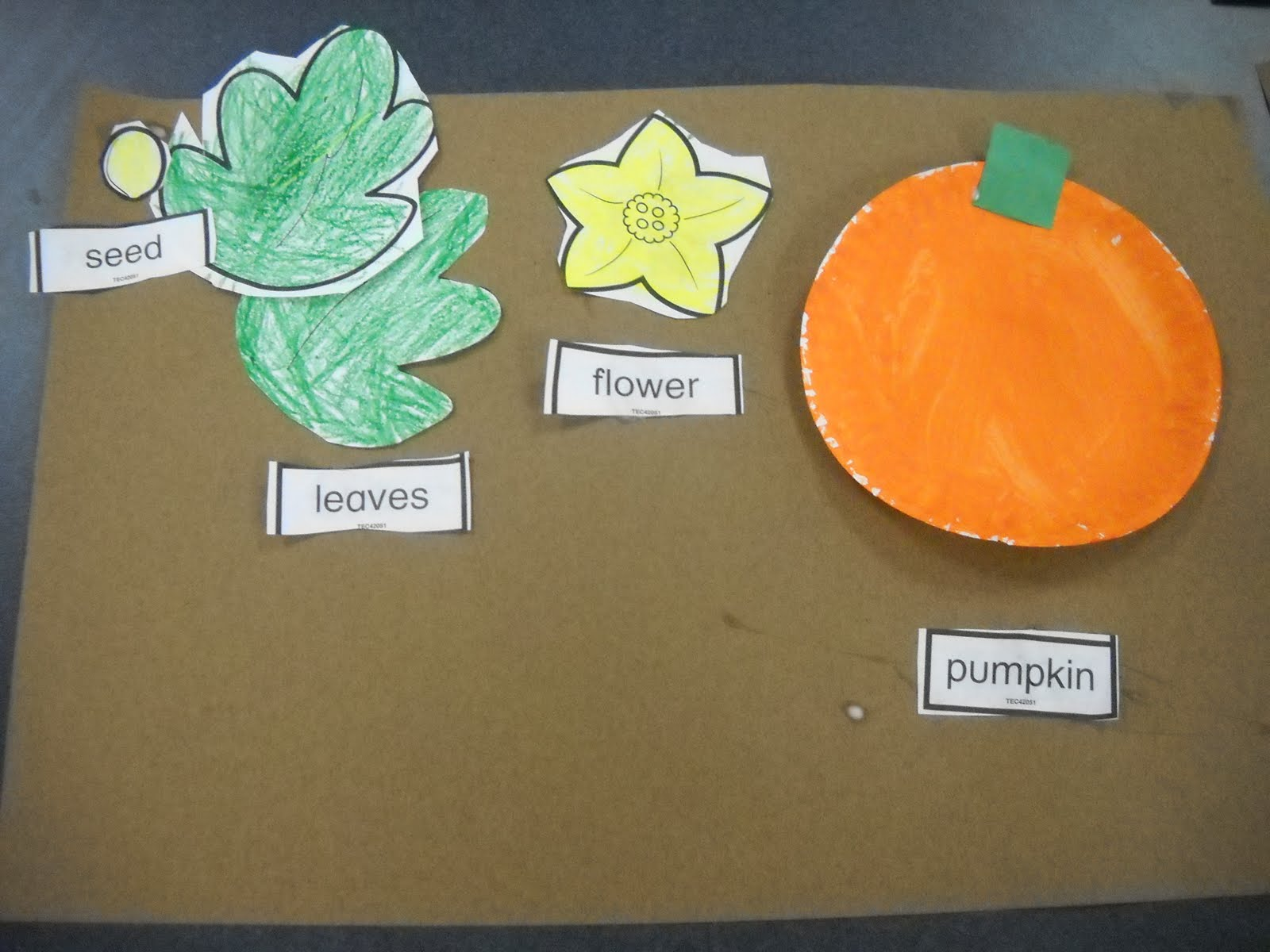 Mrs Wood S Kindergarten Class Life Cycle Of A Pumpkin