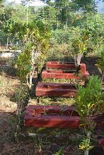 Baby Graves near Cimanggu