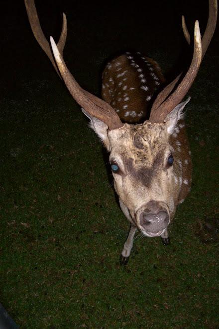 Five Thirty at Bogor Botanical Park