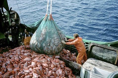 Resultado de imagen para Caza y pesca
