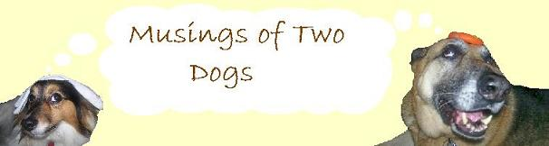 Musings of Two Dogs