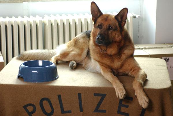 rex+el+perro+policia.jpg