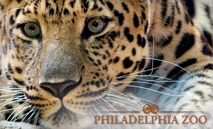 Book your Philadelphia Zoo tickets online and skip-the-line! Save time and money Lowest prices · Fast & Easy booking · Easy online booking · No hassle bookingTypes: Skip the line_xD_, Museum Tours_xD_, Cathedral tours_xD_.