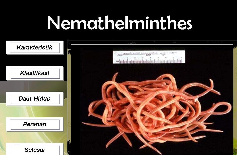 Situs Biologi Indonesia: Pengantar Nemathelminthes