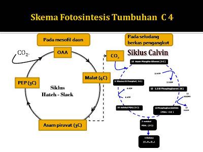 Soal Fotosintesis Sd Contoh Soal Percobaan Fotosintesis Un Smp Bahaskata 40 Arsip Soal Ujian