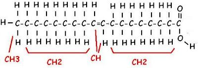 Molécula de ácido oleico, con sus CH, varios CH2, un CH3, el COOH