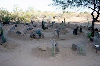 Garden of Desert Plants