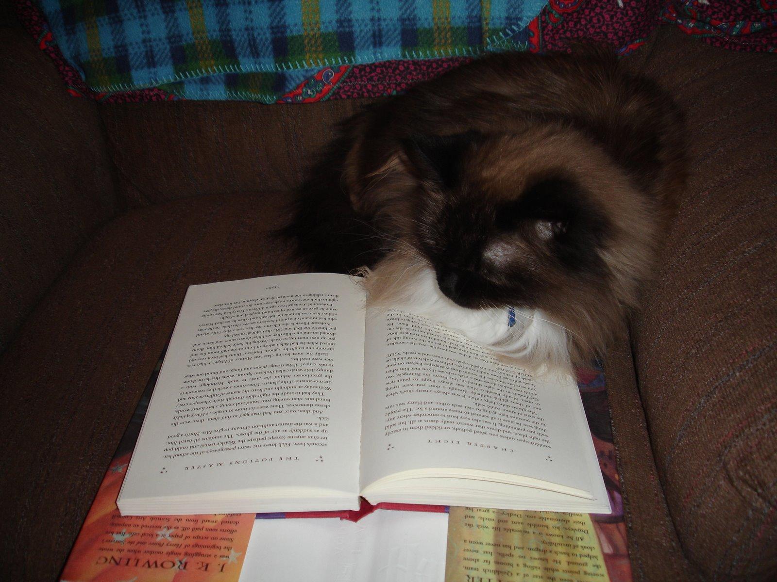 [Reading+Kitty+002.jpg]