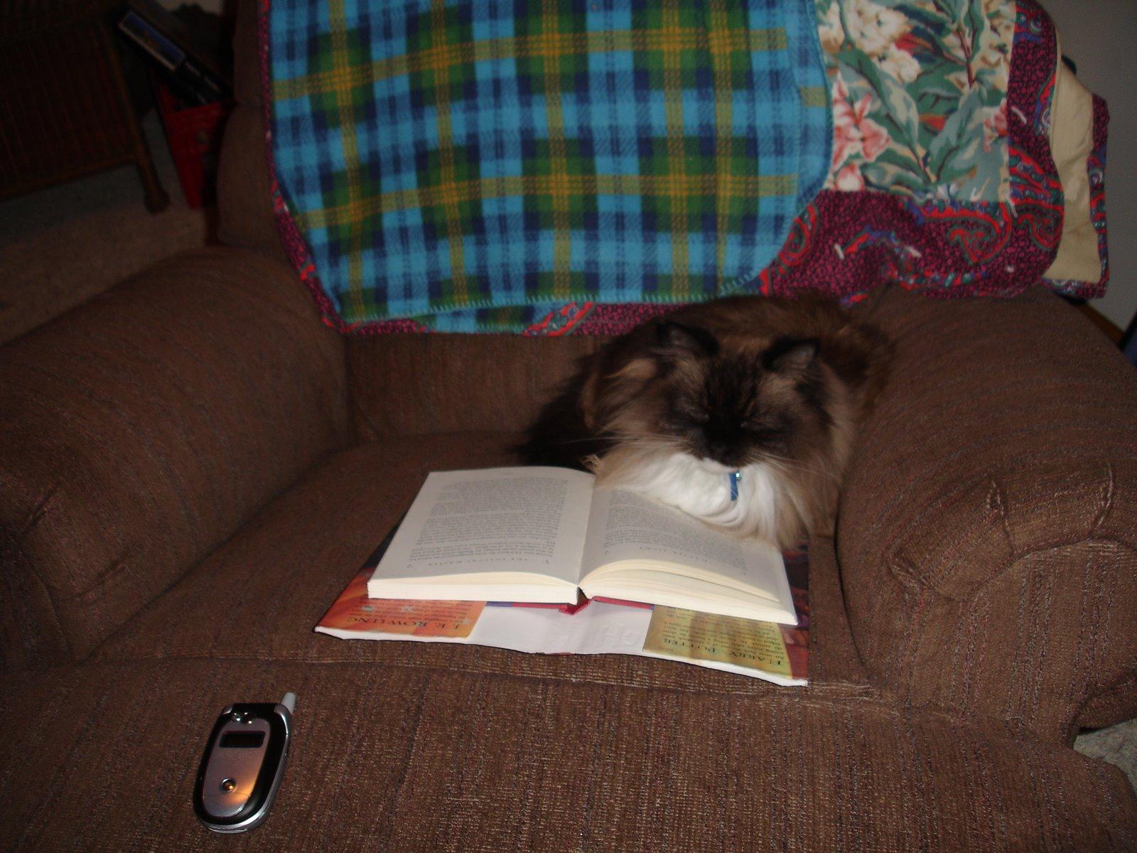[Reading+Kitty+001.jpg]