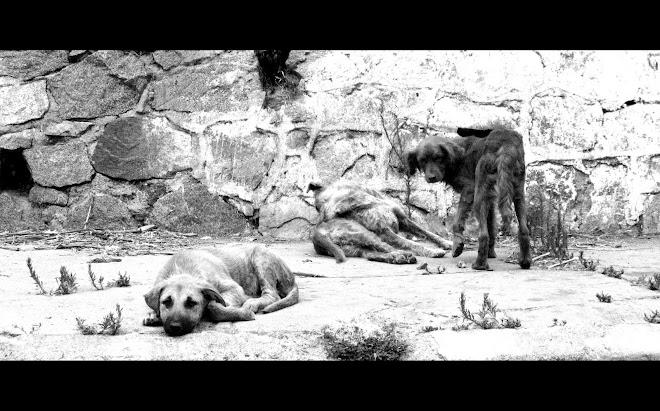 LOS PERROS VIOLENTOS/LES CHIENS HARGNEUX