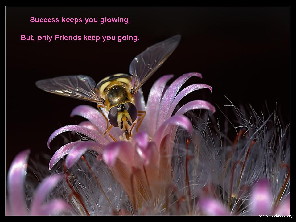 Cute Wallpapers For Desktop With Friendship Quotes Friendship Bouquet Images Free Download Background