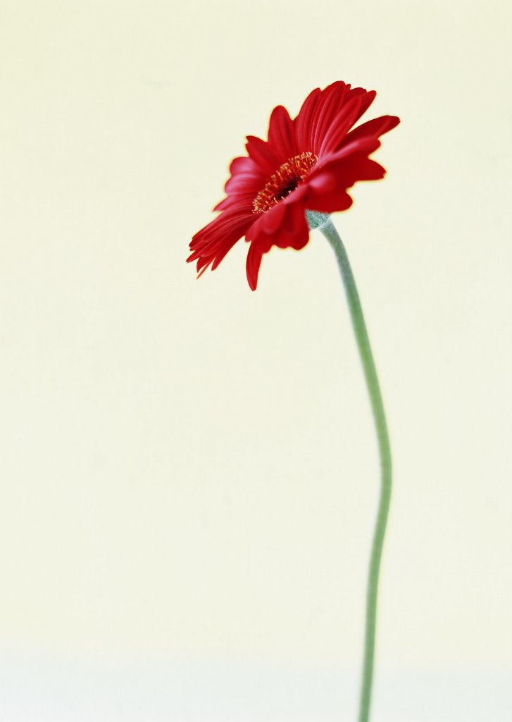 Flower Photography 1 4