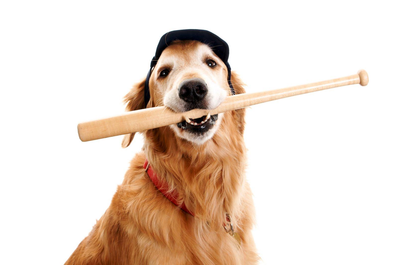 Best Dog Friendly Hotels In Toronto Gofetch Ca Blog