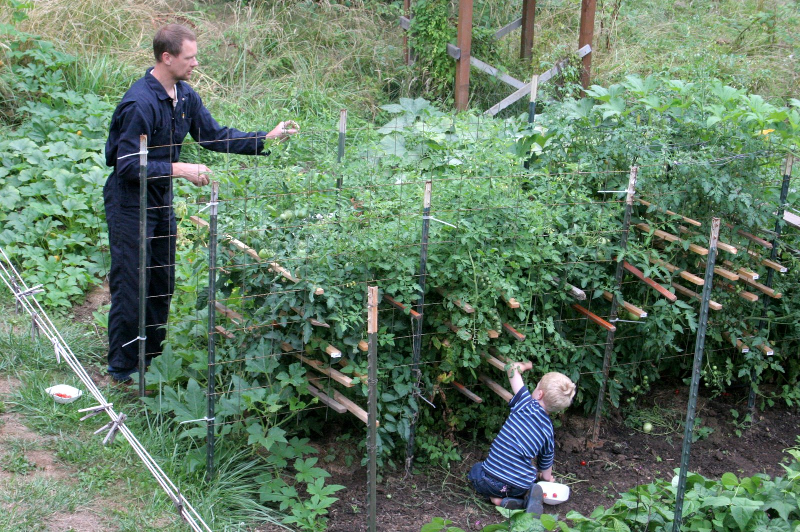The Proven Tomato Cage For Tall Plants