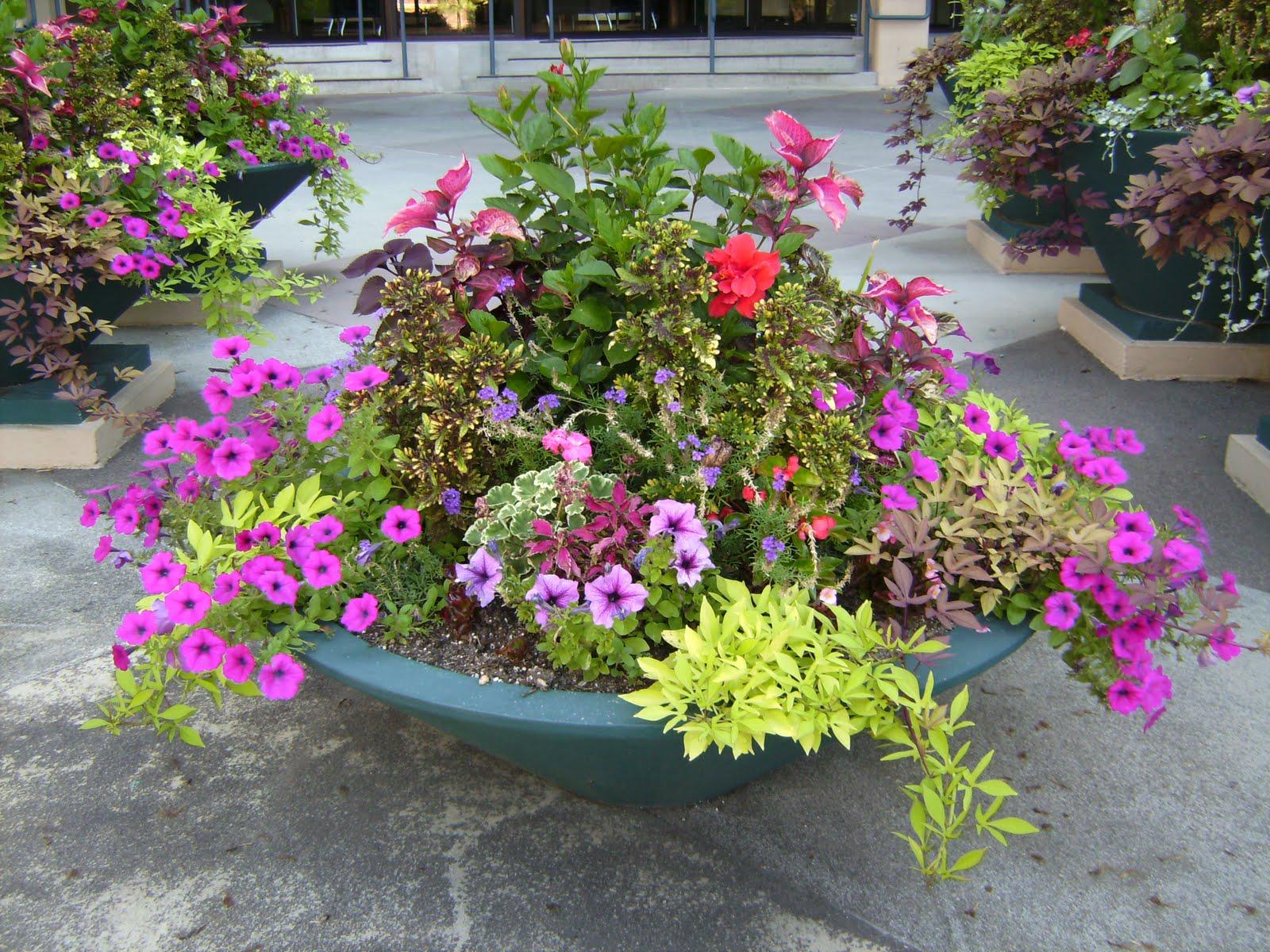 Garden Designers Roundtable: Containers | Garden Share Bristol