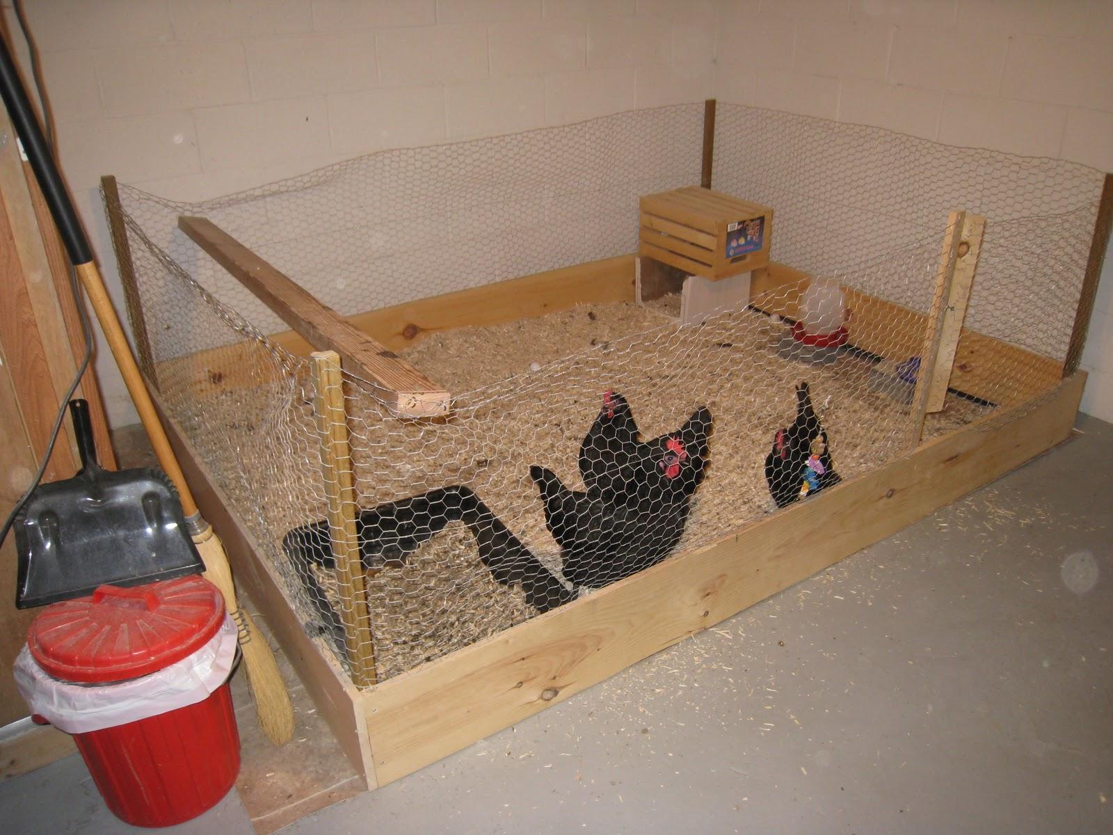 Clandestine Chickens Clandestine Chicken Care Overview