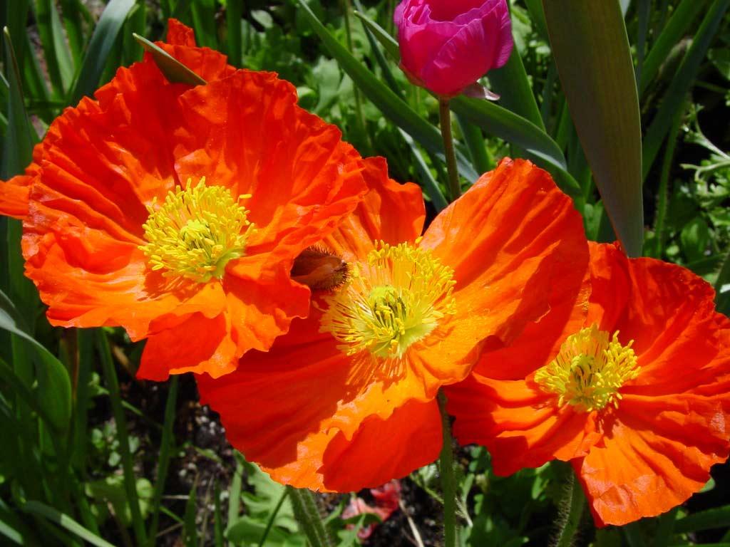 Beautiful Flowers | - photo#16