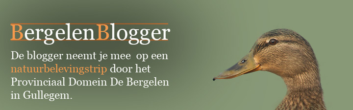 BergelenBlogger