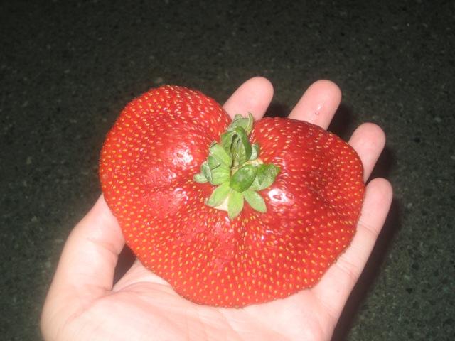 [Strawberry+2.JPG]