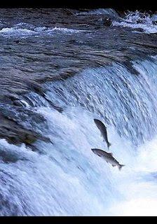 http://1.bp.blogspot.com/_Hq3wDkoxp0o/SLN5nuWBXXI/AAAAAAAAEqs/NJUId8pFHXc/s1600-h/salmon.jpeg