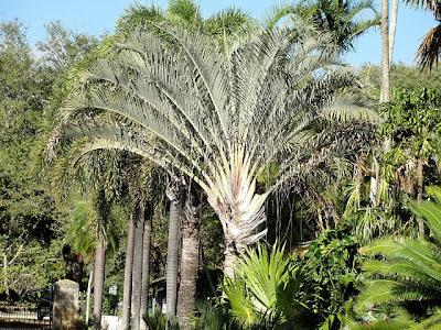 Fairchild Tropical Botanical Gardens