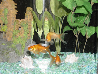 The compost bin fish tank water is great for plants for Well water for fish tank
