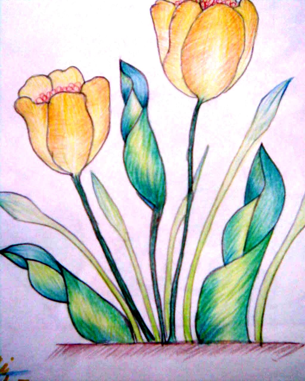 Boundless24X7 - Paintings and Drawings: Colour Pencil Shading