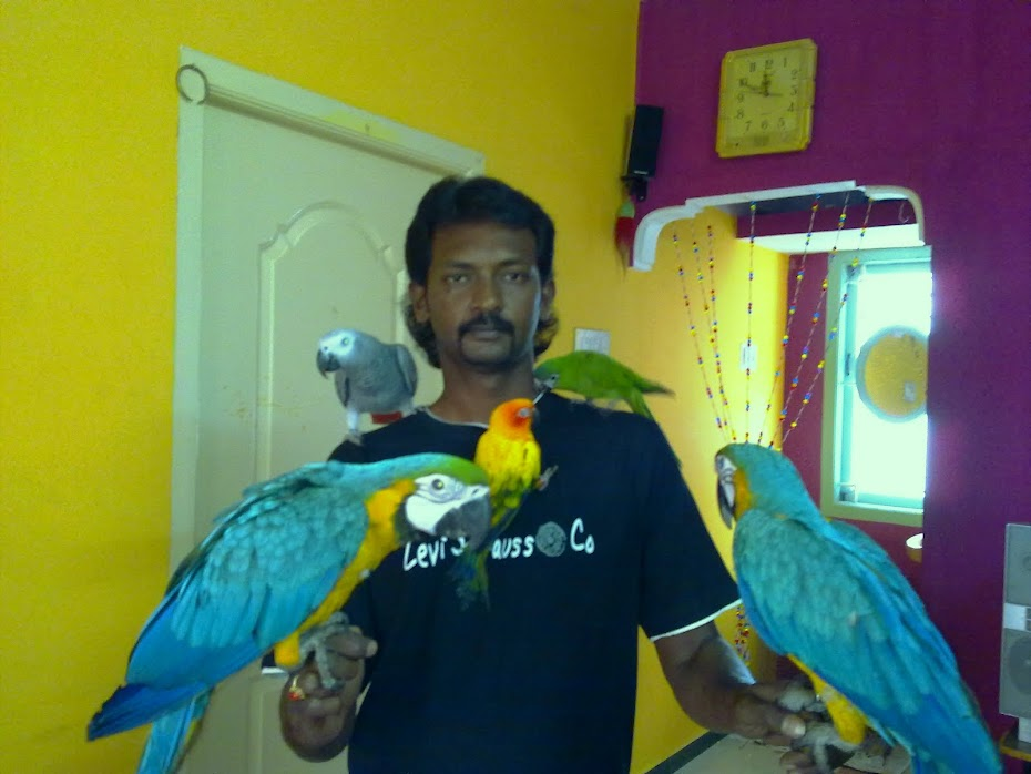Preethi Farms Exotic Birds Breeders Hand Tamed Parrots