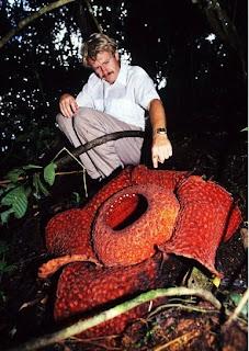 plante carnivore grande taille