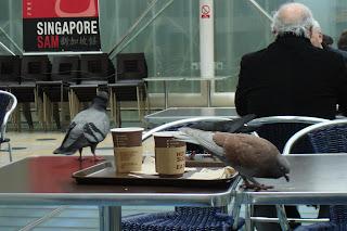 Close up of pigeons at Paddington Station