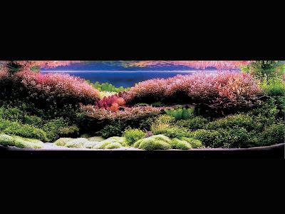 Great Job Aaron: ADA Aquascape Contest 2005 Pics