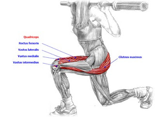 Stand with your feet hip-width apart  Lift a light barbell up to a    Walking Lunges Muscles Worked