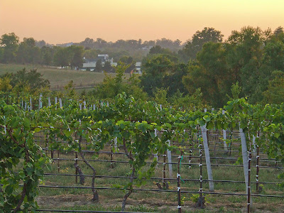 Augusta, Missouri, USA - sunset over a vineyard