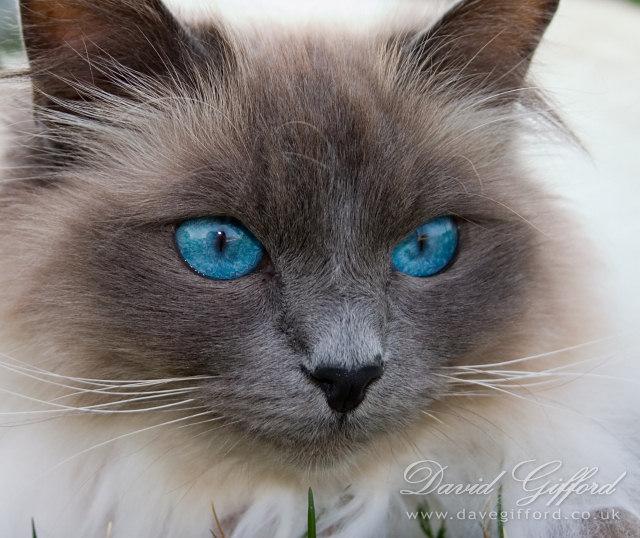 [20070414235100_blue-eyes-2-by-david-gifford.jpg]