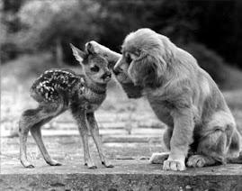 """""""Fate l'amore,non fate la guerra!"""""""