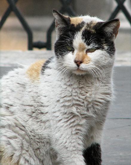hemlösa katter göteborg