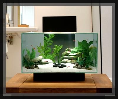 1000 deco un monde sous marin chez vous decouvrez le. Black Bedroom Furniture Sets. Home Design Ideas