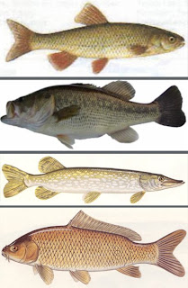 Orlando west virginia fish stories for Oily fish representative species