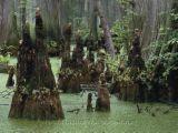 [swamp3.jpg]