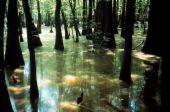 [swamp1.jpg]