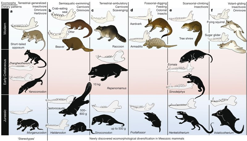 [luo+fig+2+early+mammals]