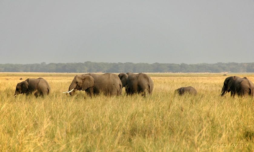 Las grandes llanuras de África